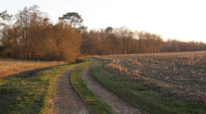 Chemin de campagne illuminé par le soleil rasant d'hiver